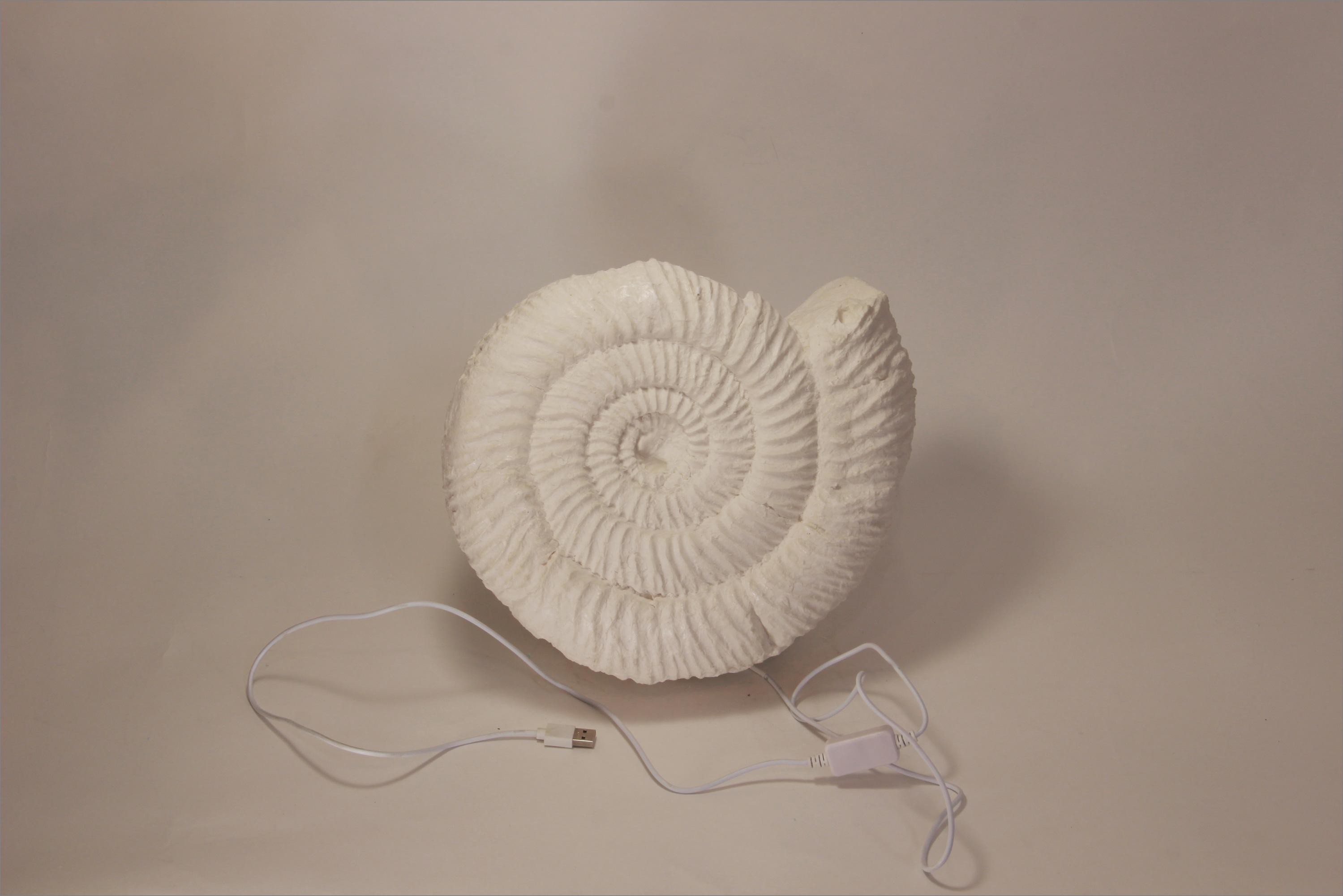 аммонит, ammonites